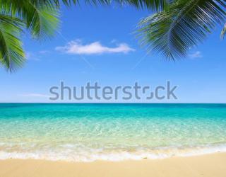 Фотообои Пляж, пальмы 100933207