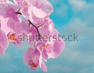 Фотообои Орхидея 404614054