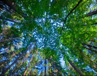 Фотообои деревья для потолка 22528