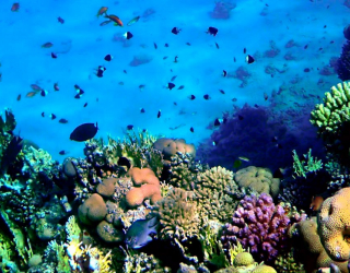 Фотообои Красота подводного мира 3297