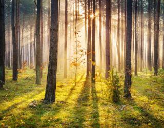Фотообои Закат в лесу 23199
