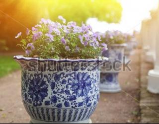 Фотообои Цветы в горшке 449895580