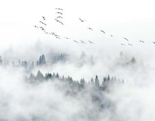Фотообои Горы в тумане 22422