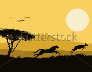 Фотообои Дерево, леопард, закат 303773966