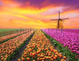 Фотообои Тюльпаны, мельница 400062880