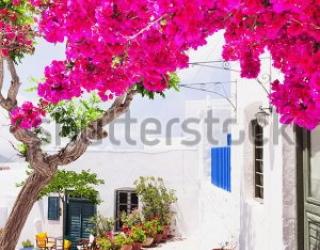 Фотообои Цветы, дом 454590907