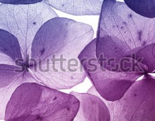 Фотообои Цветы 84739522
