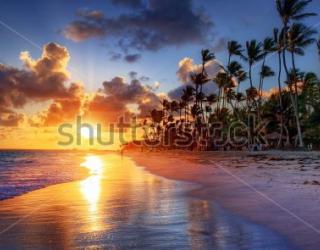 Фотообои Пляж, закат, пальмы 255555796