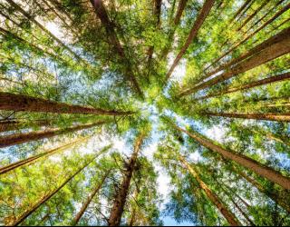 Фотообои лес для потолка 22523