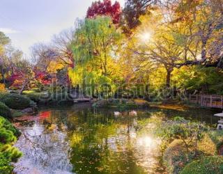 Фотообои Деревья, пруд 163726319