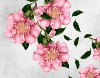 Фотообои Рисованные цветы на стене 20076