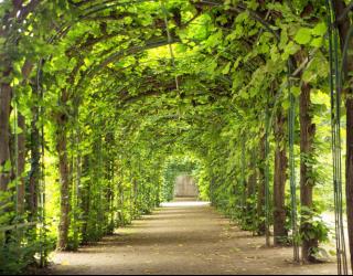 Фотообои зеленая арка 20781