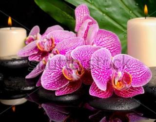 Фотообои Орхидеи, свечи  205013308