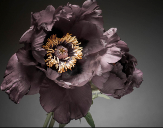 Фотообои Винтажный тёмный цветок 24684